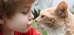 חתולים רואים צבעים, איך חתולים מתקשרים איתנו ועם העולם, איזה צבעים חתולים רואים