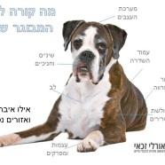 זקנה היא לא מחלה! איך לטפל בכלב זקן?