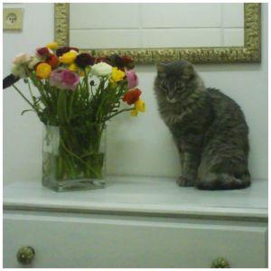 נוקי החתולה - פיפי מחוץ לארגז - אורלי זכאי
