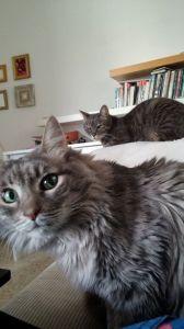 בוני-ונוקי-חתולים-ושפת-גוף