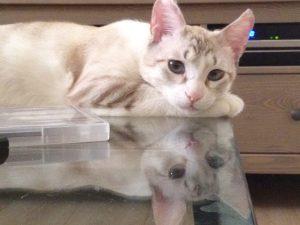 חתול משלשל מעל שנה, מטופל ברפואה סינית - פורמולה של צמחי מרפא
