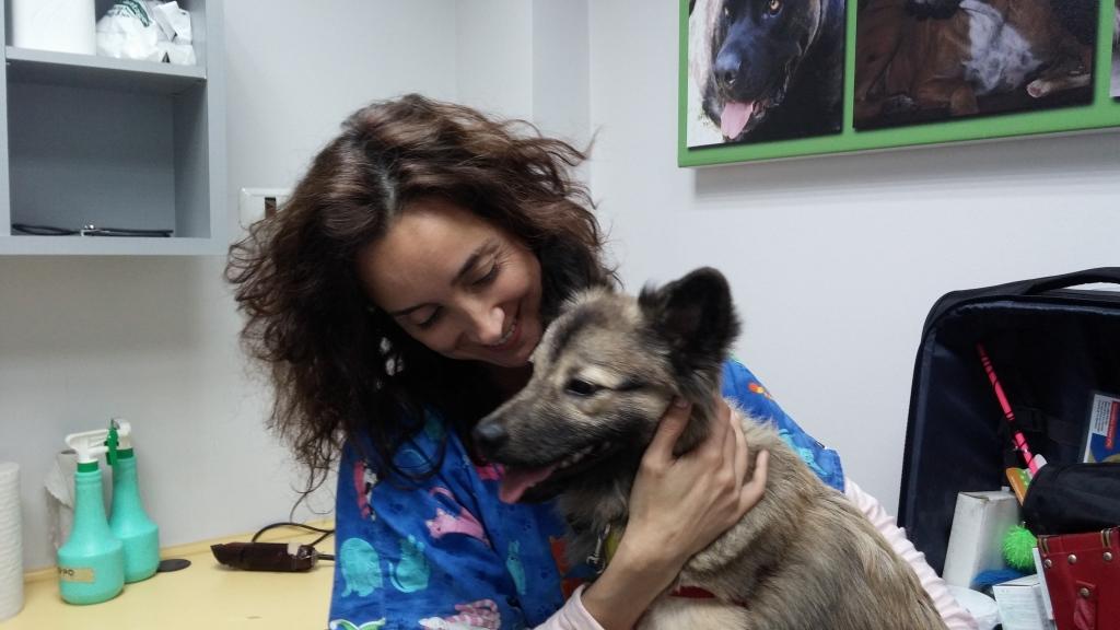 רפואה סינית לבעלי חיים