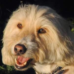 כלבים, פחדים, חרדות וטיפול ברפואה סינית