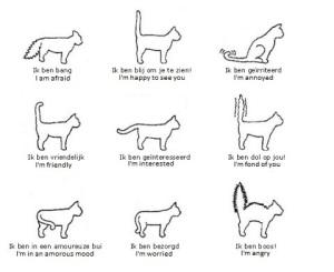 cat tails 300x245 איך לקרוא את שפת הגוף של החתול?