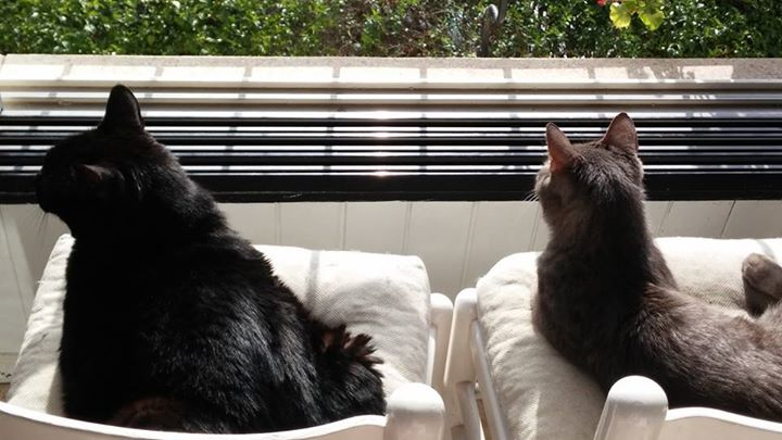 cats enjoy the view - orly zakay cats behavior