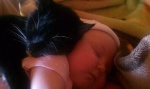 cute-kittens51