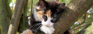 התנהגות חתולים